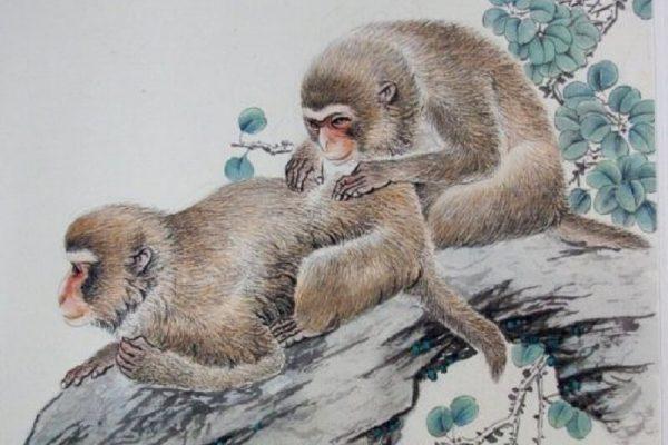 Monkey Zodiac Sign - Year of Monkey Traits with Horoscope Meaning & Personality