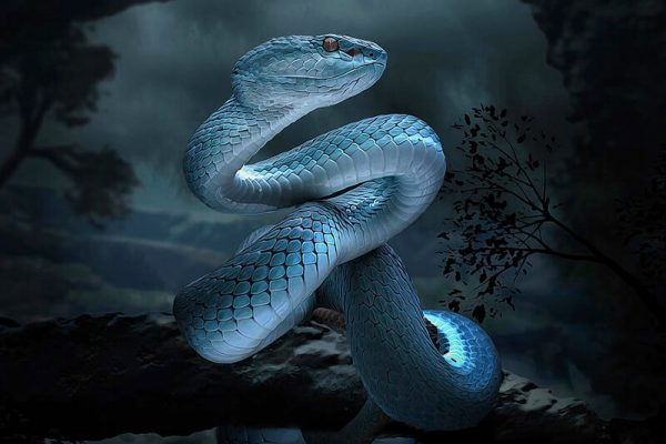 Snake Zodiac Sign - Year of Snake Traits with Horoscope Meaning & Personality